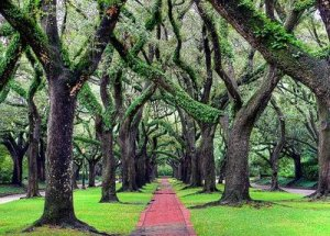 Oaks North Blvd